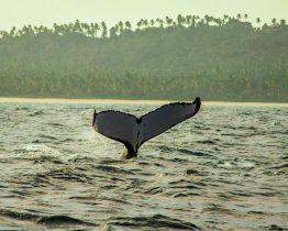 bateau pour observation baleines au bresil